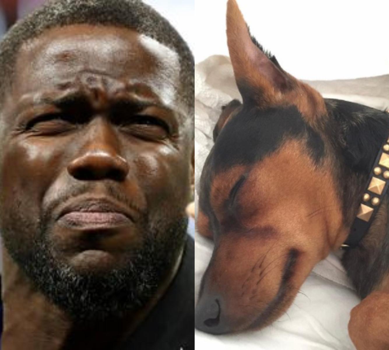 Hart Doggy